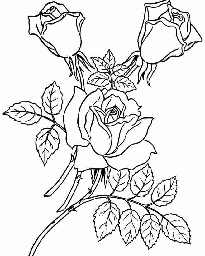 dc coloring pages - free rose pictures