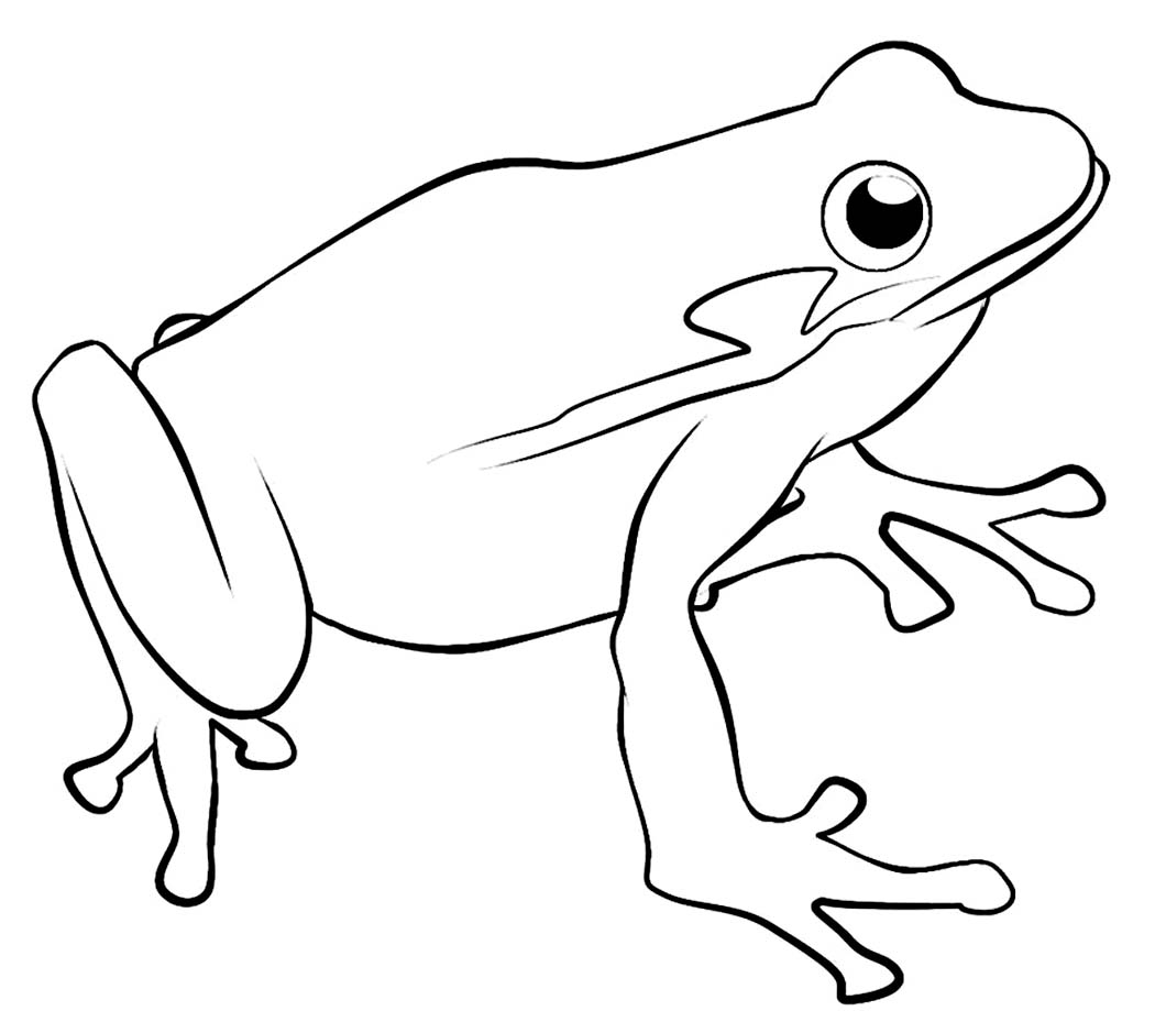 dc coloring pages - frog template for kids