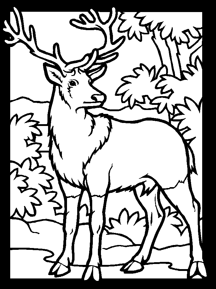 Deer Coloring Pages - Deer Coloring Pages