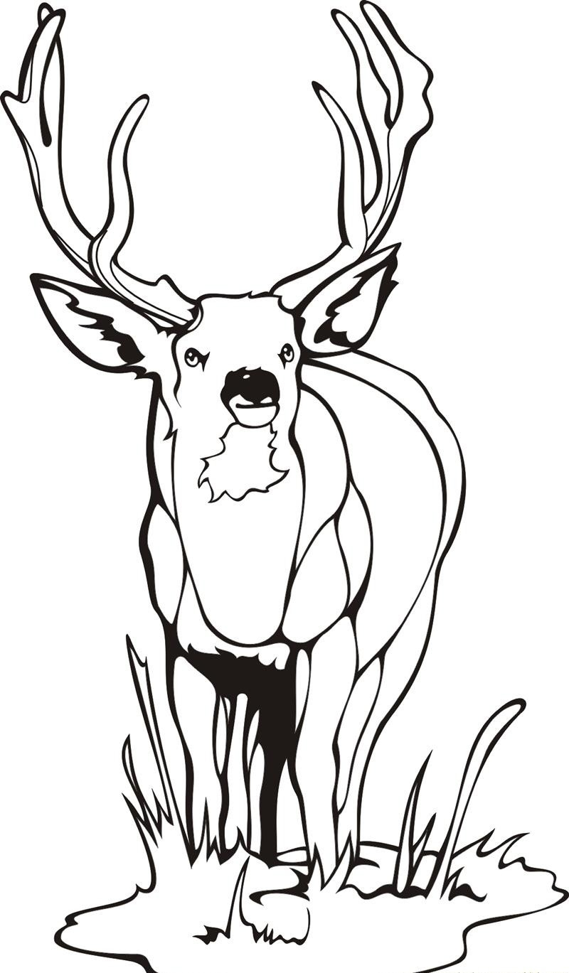 28 deer coloring pages images - Coloring Pages Of Deer 2