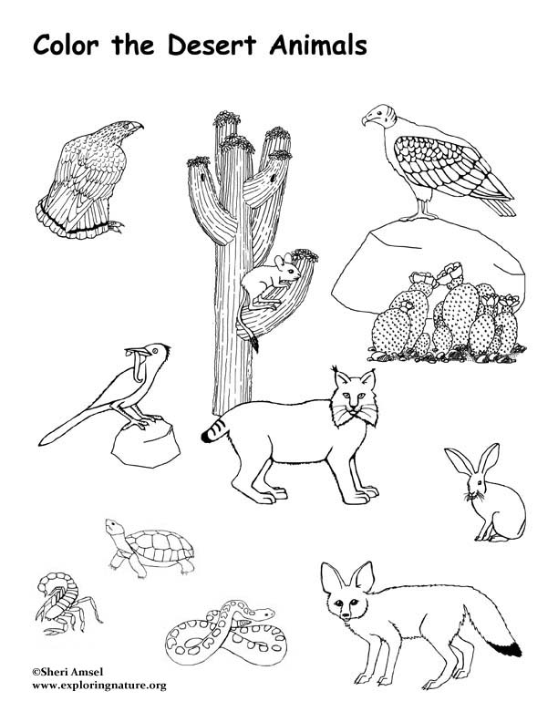 desert coloring pages - coloring desert picture