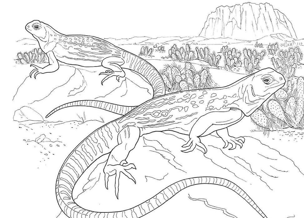 desert coloring pages - colouring pictures of desert animals