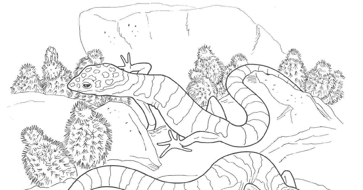 Desert Coloring Pages   Colouring Desert Animals