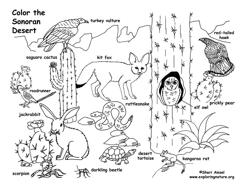 desert coloring pages - 2755