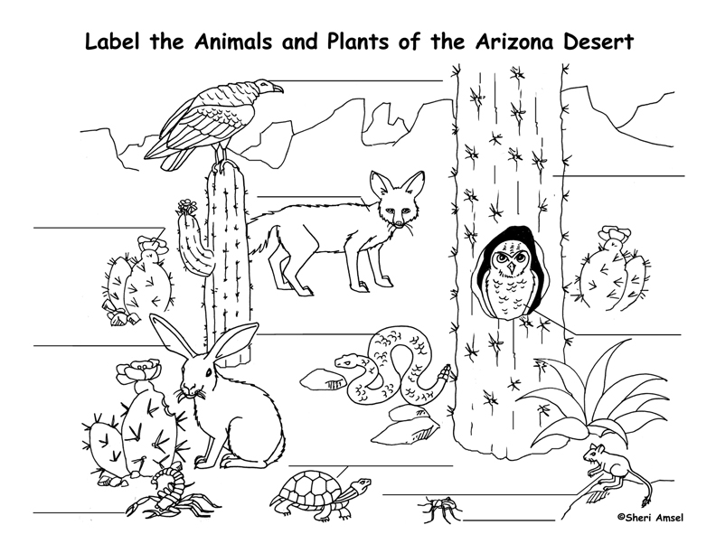 desert coloring pages - desert animals coloring pages