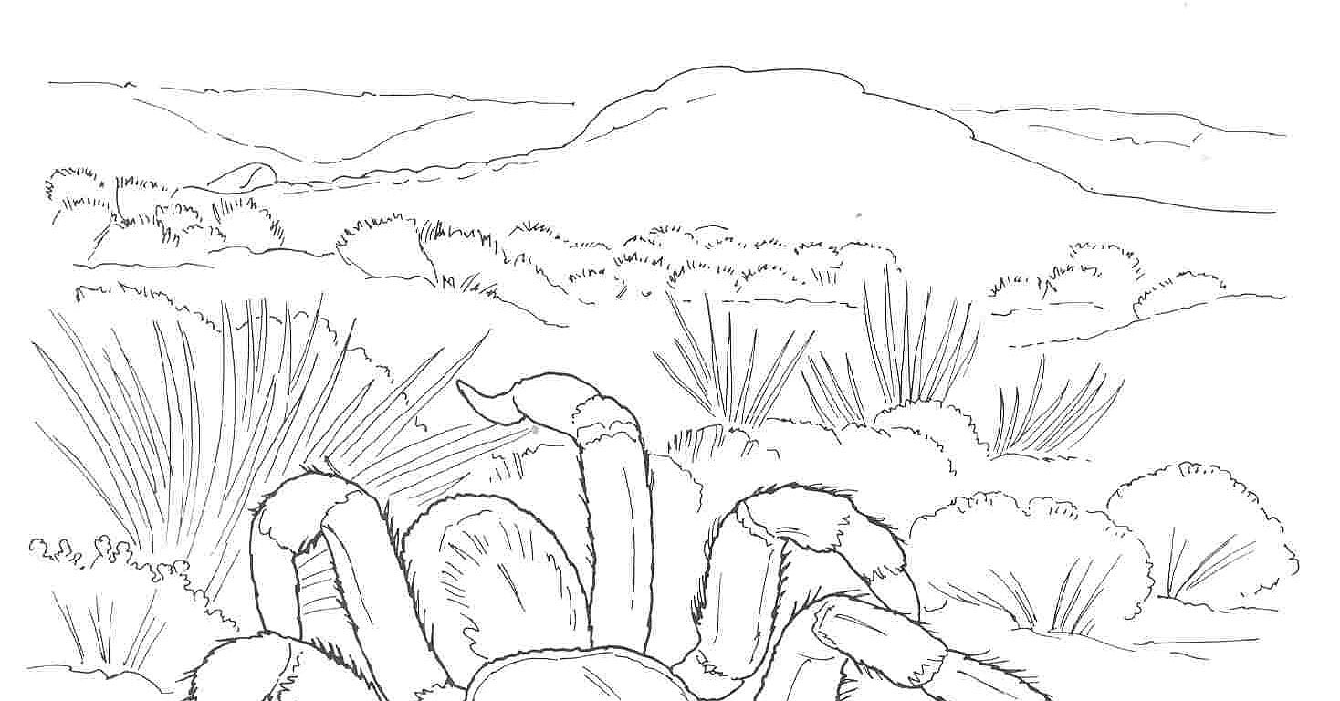 desert coloring pages - desert