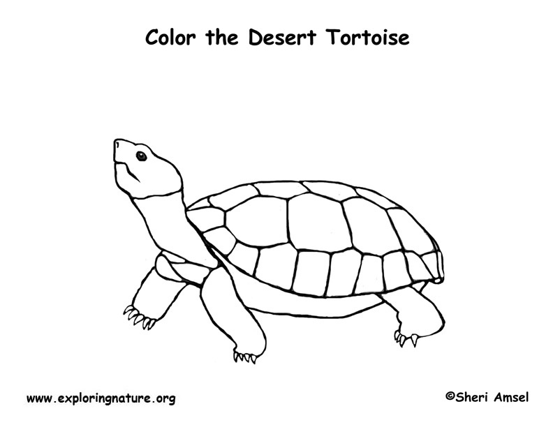 desert coloring pages - 2831