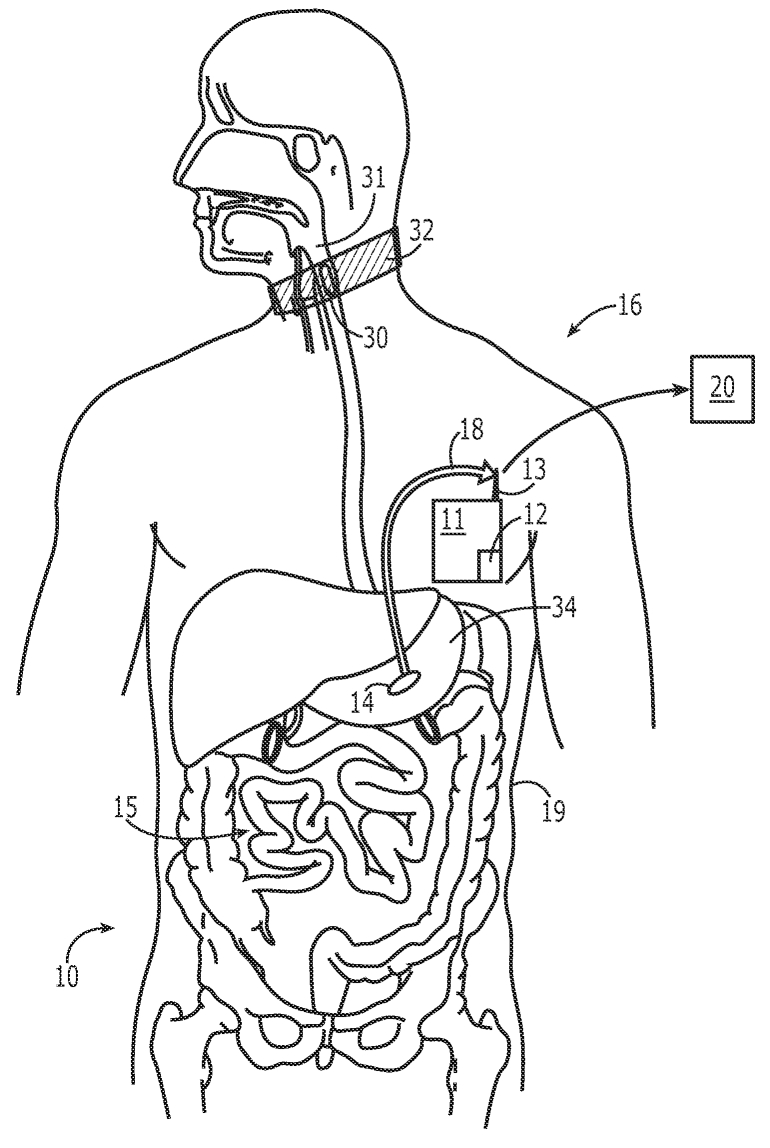 digestive system coloring page - coloring pages of digestive system