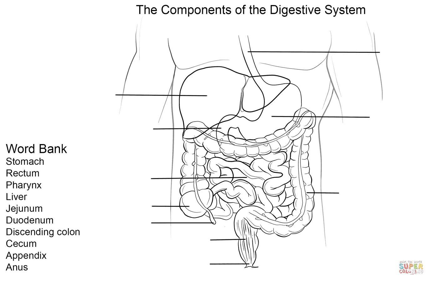digestive system coloring page - digestive system diagram coloring sketch templates