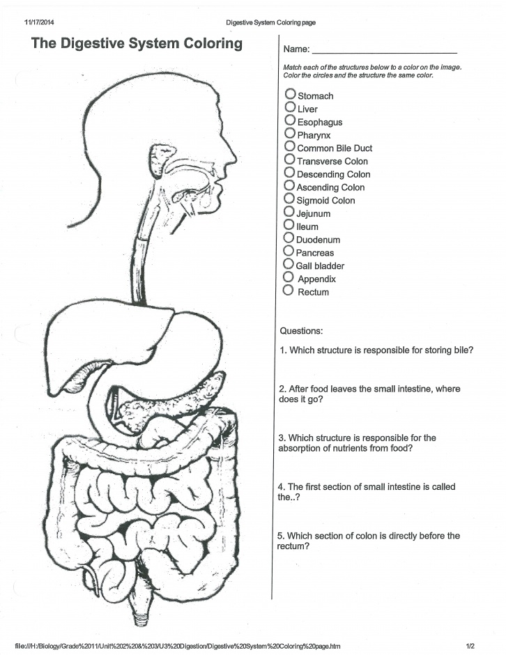 digestive system coloring page - human digestive system coloring worksheet sketch templates