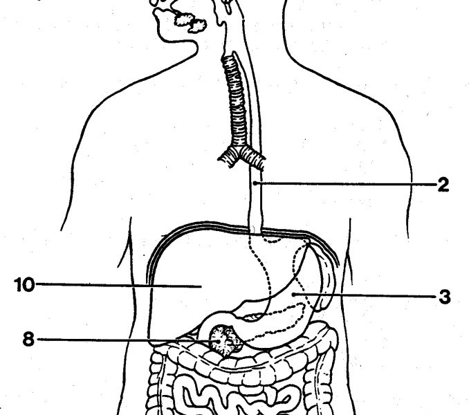 digestive system coloring page - label digestive system coloring sketch templates