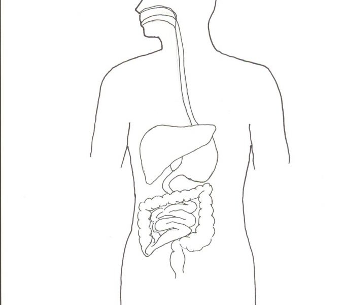 21 Digestive System Coloring Page Collections FREE