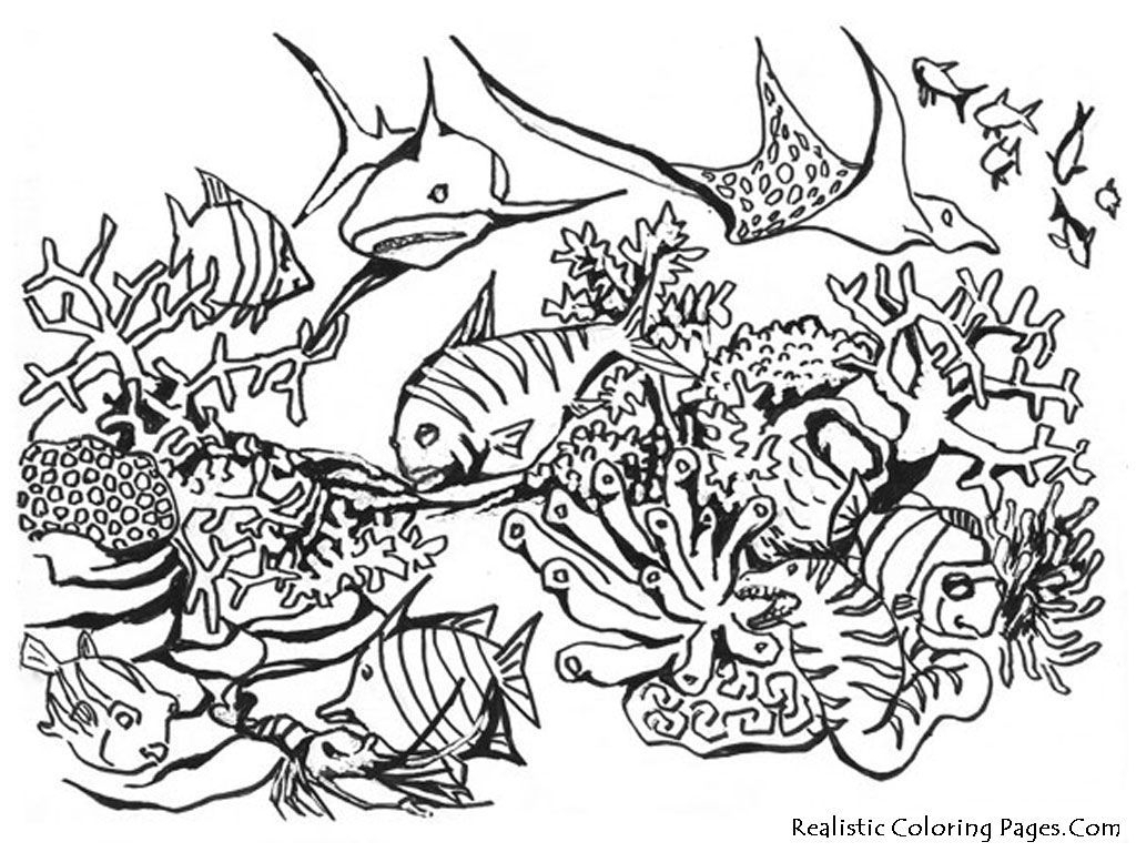 dltk coloring pages - beach animal coloring pages ocean scene coloring page az coloring pages
