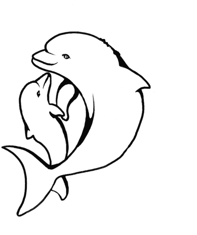 dolphin coloring pages - dolphin coloring pages
