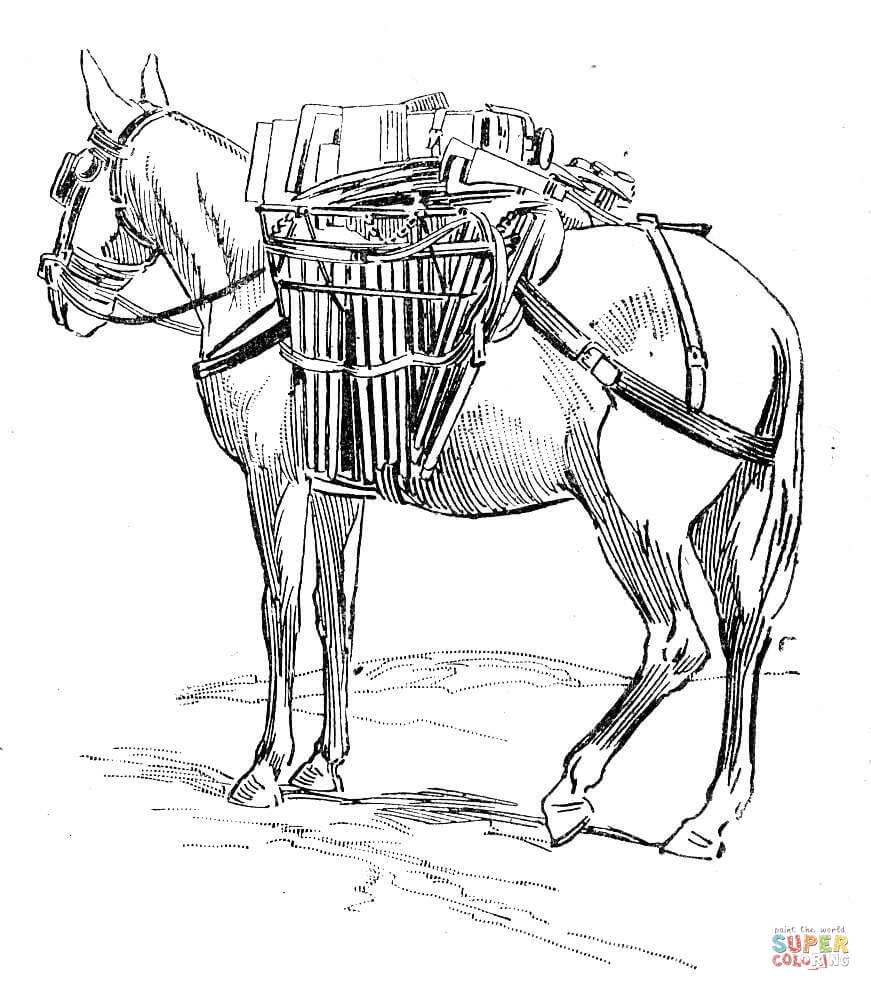 donkey coloring page - ane bate