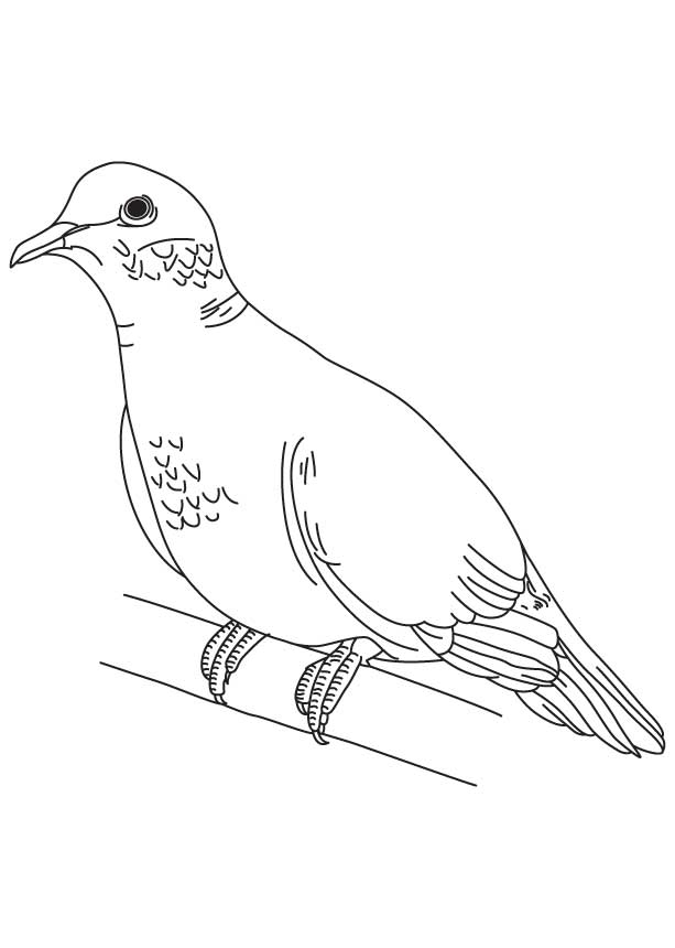 28 Dove Coloring Page Images | FREE COLORING PAGES - Part 2