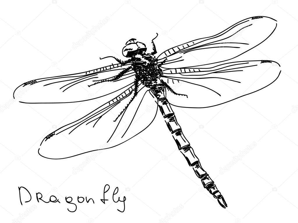 dragonfly coloring page - stock illustration hand drawn dragonfly vector