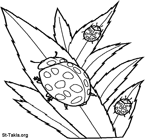 dragonfly coloring page - Coloring 065 LadyBird