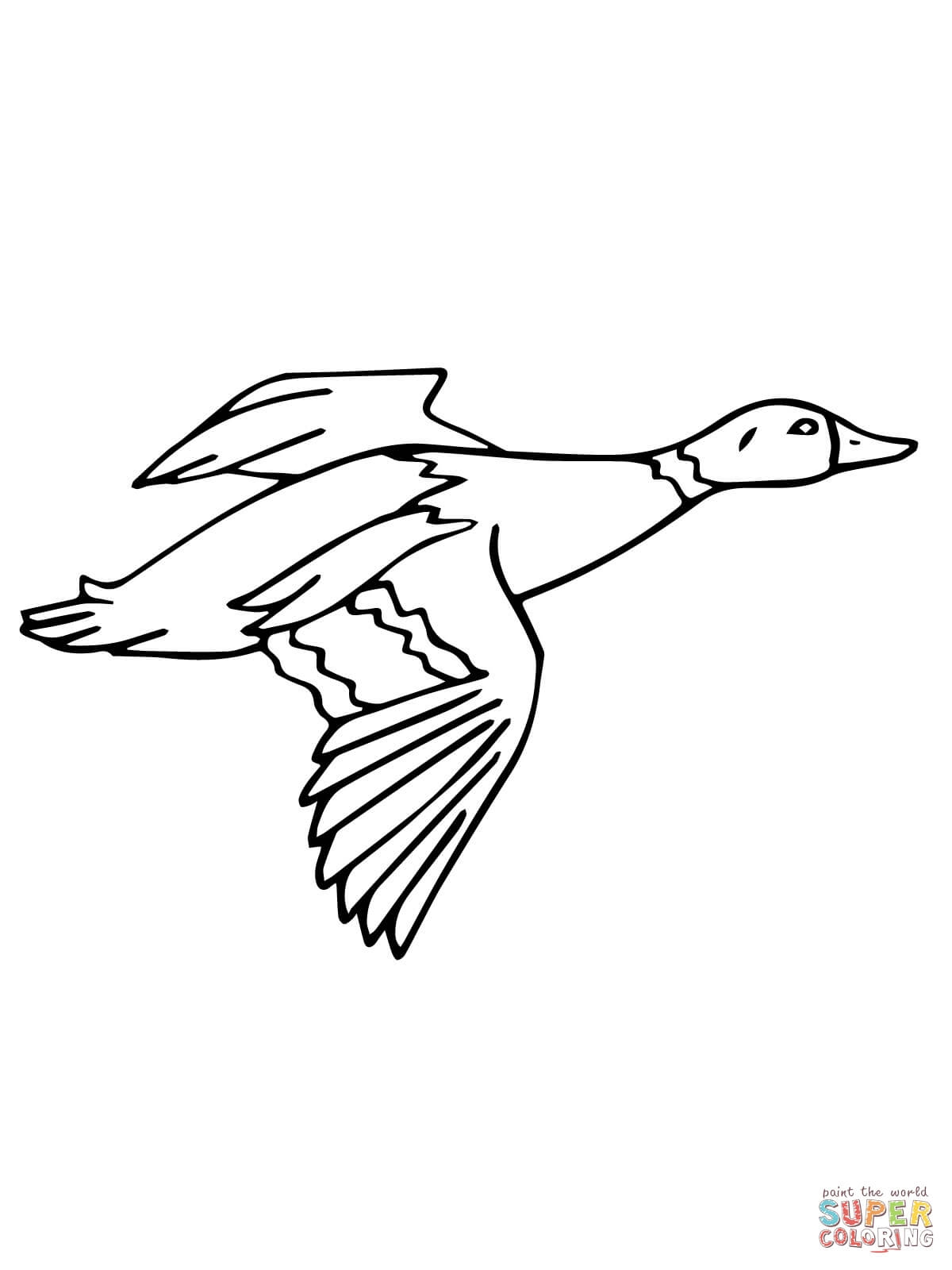 drake coloring pages - flying mallard drake