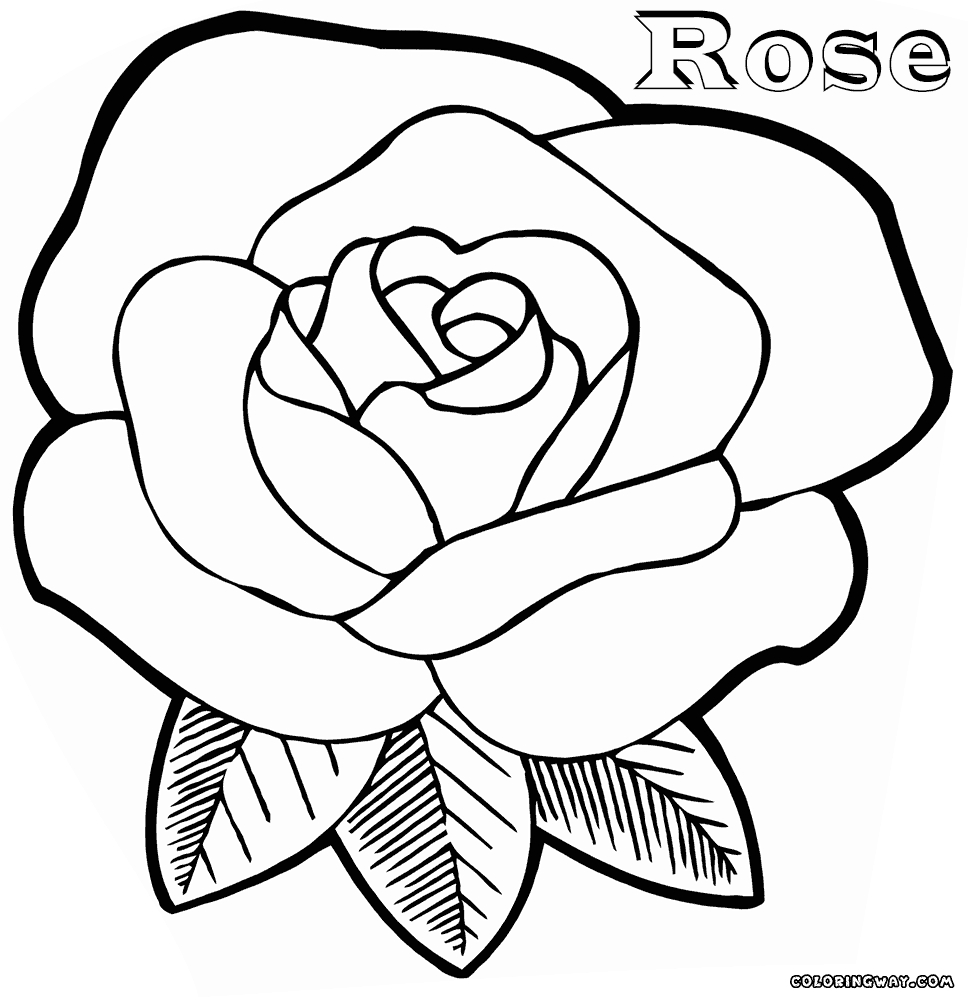 drawing coloring pages - rose coloring pages