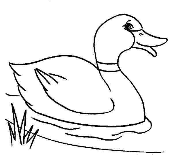 duck coloring pages - duck