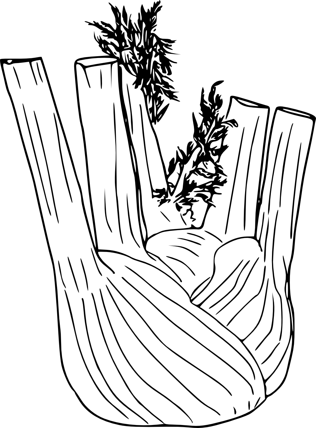 e coloring pages - fenouil