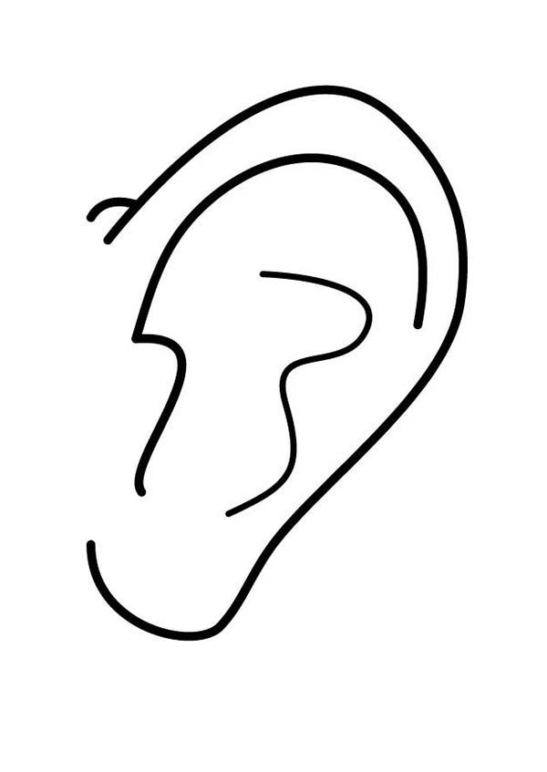 24 Ear Coloring Page Collections