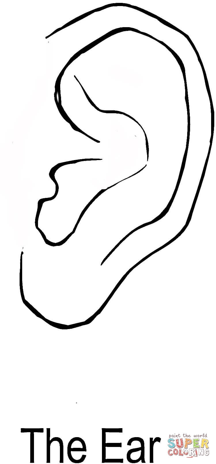 ear coloring page - oi human ears crafts for preschoolers coloring sheets