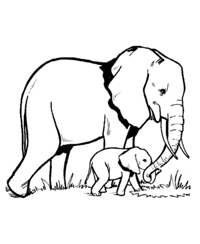 easy mandala coloring pages - elephant coloring pages