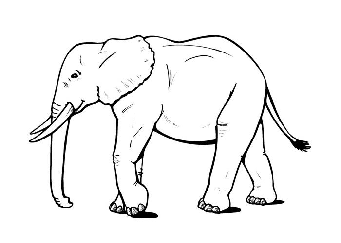 elephant coloring pages - cartoon elephant coloring pages