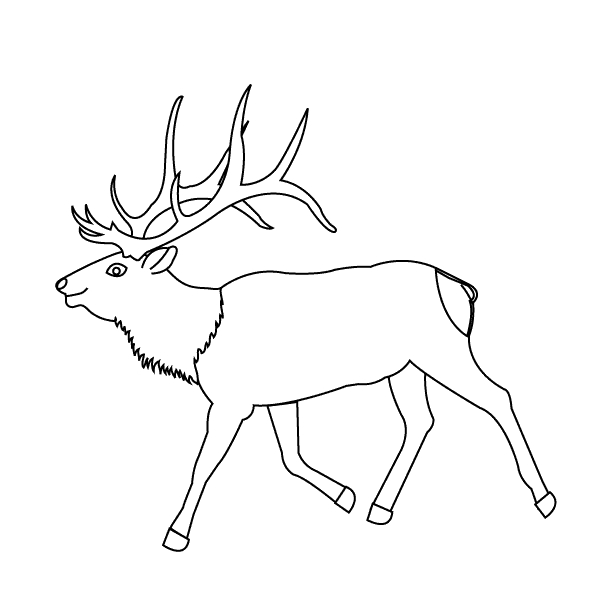 elk coloring pages - page26