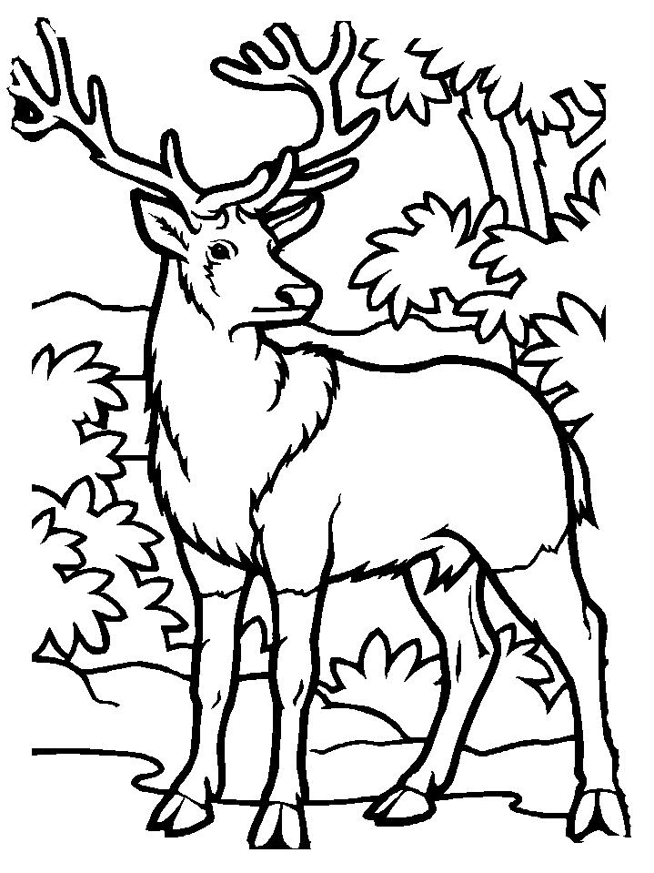 25 Elk Coloring Pages Selection FREE COLORING PAGES