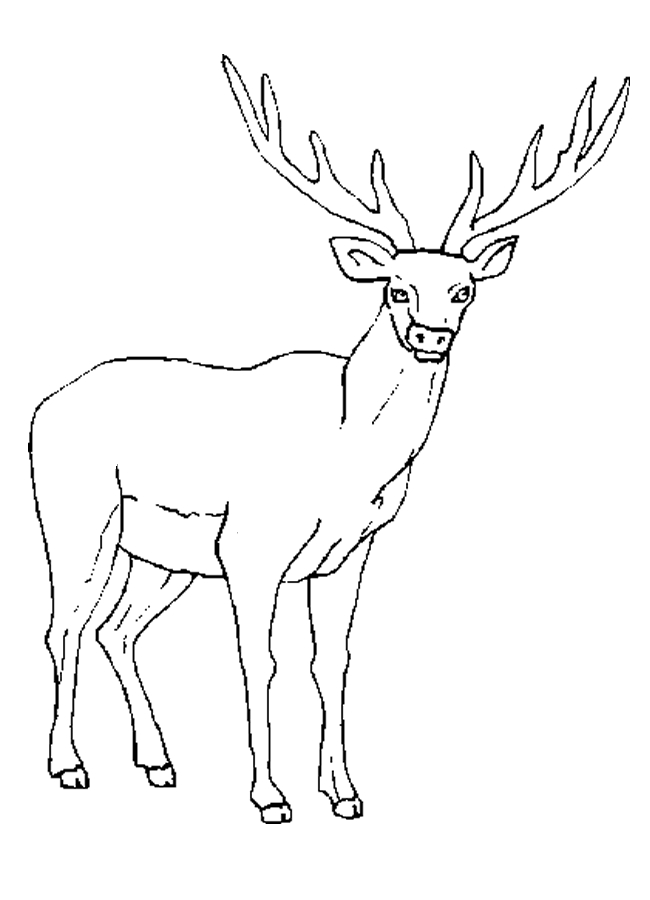 25 Elk Coloring Pages Selection | FREE COLORING PAGES