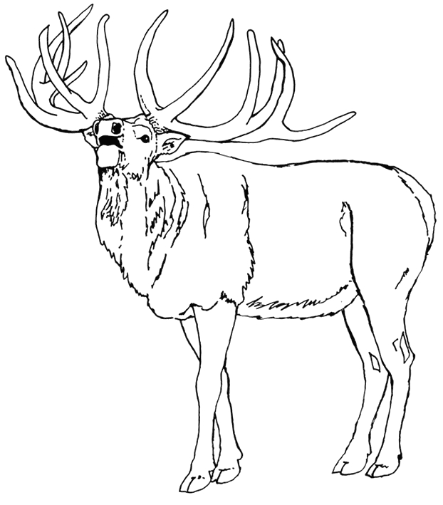 elk coloring pages - moose coloring pages