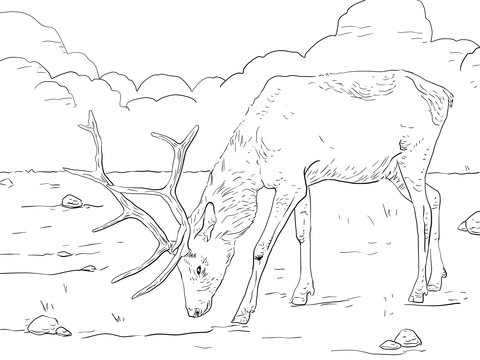 elk coloring pages - rocky mountain elk coloring page sketch templates