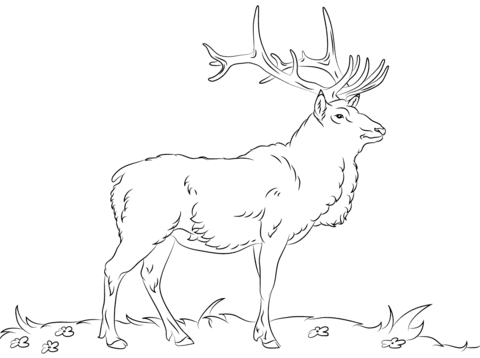 Elk Coloring Pages - Rocky Mountain Elk Coloring Page Coloring Pages