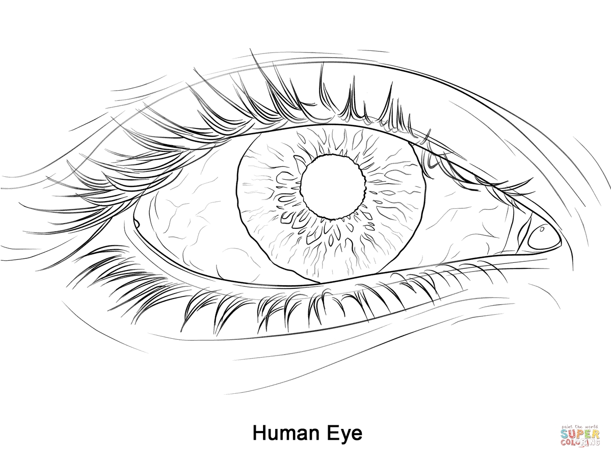 Eye Coloring Page - Human Eye Coloring Page