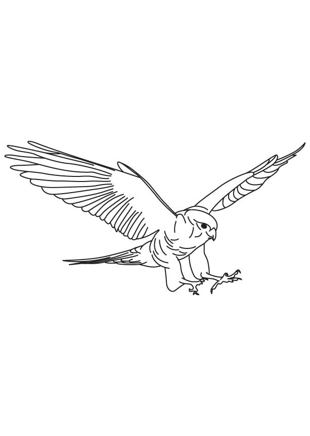 falcon coloring pages - brown falcon in flight coloring page 1d4414