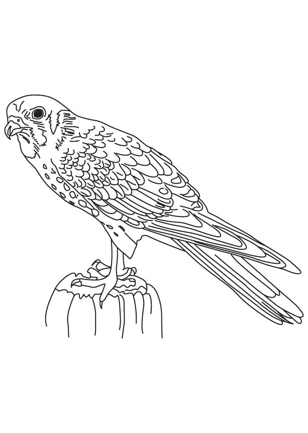 falcon coloring pages - falcon marvel sketch templates