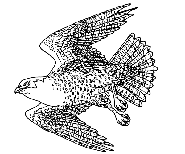 falcon coloring pages - 0