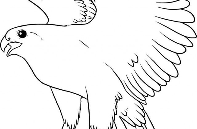 falcon coloring pages - flying falcon sketch templates