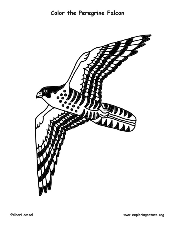 falcon coloring pages - 4867