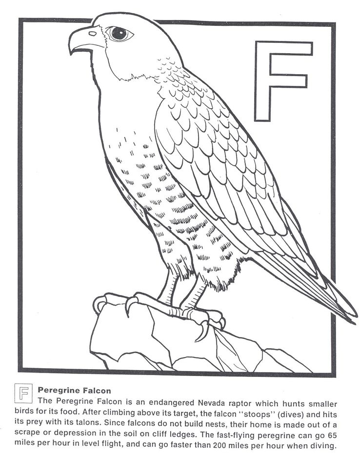 falcon coloring pages -