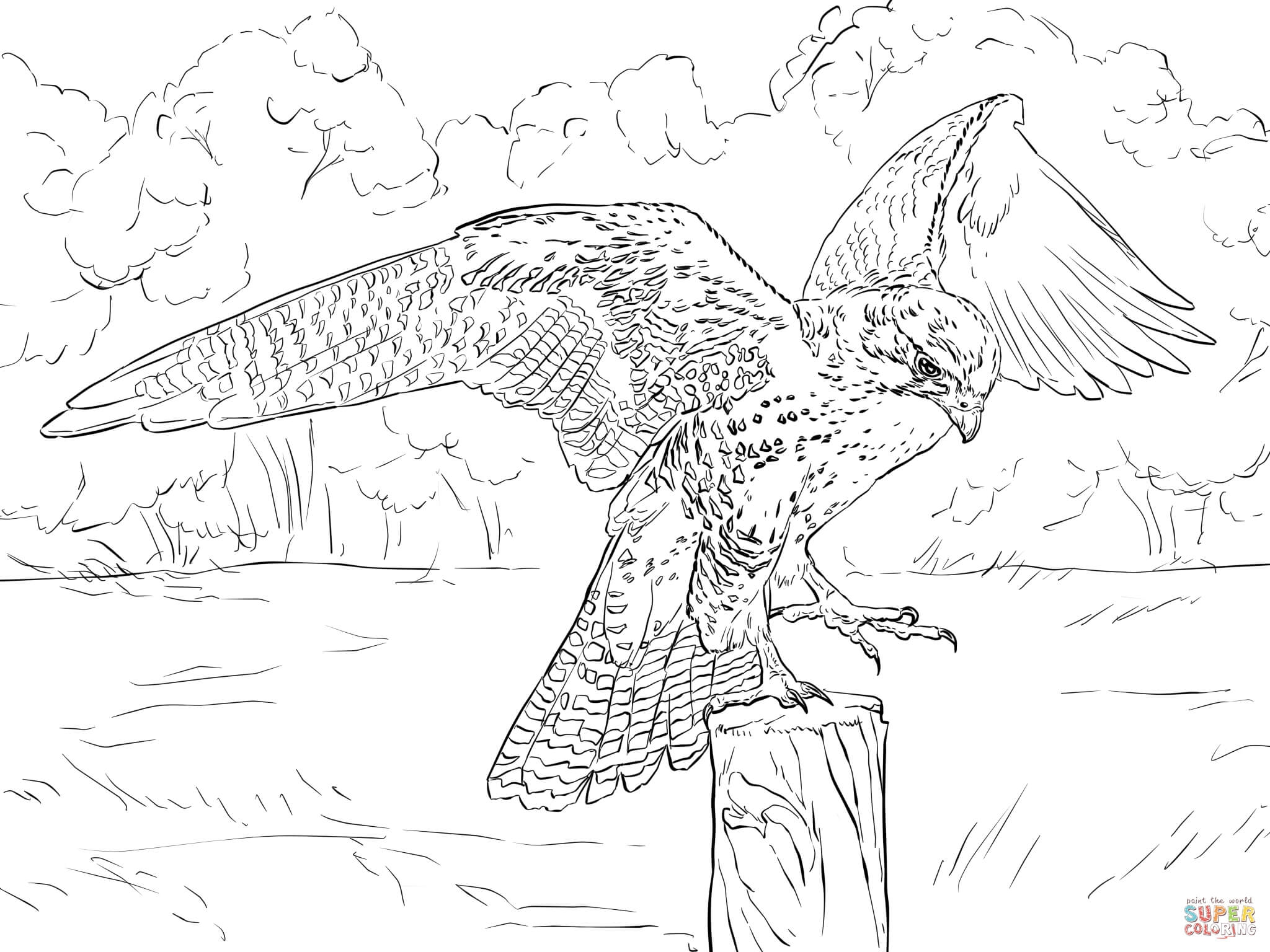 falcon coloring pages - prairie falcon