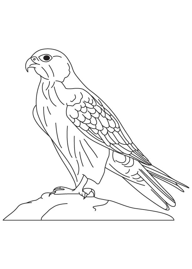 falcon coloring pages - saker falcon coloring page 1d4417