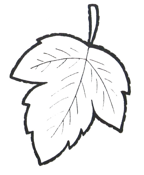 fall leaves coloring pages - p=3487