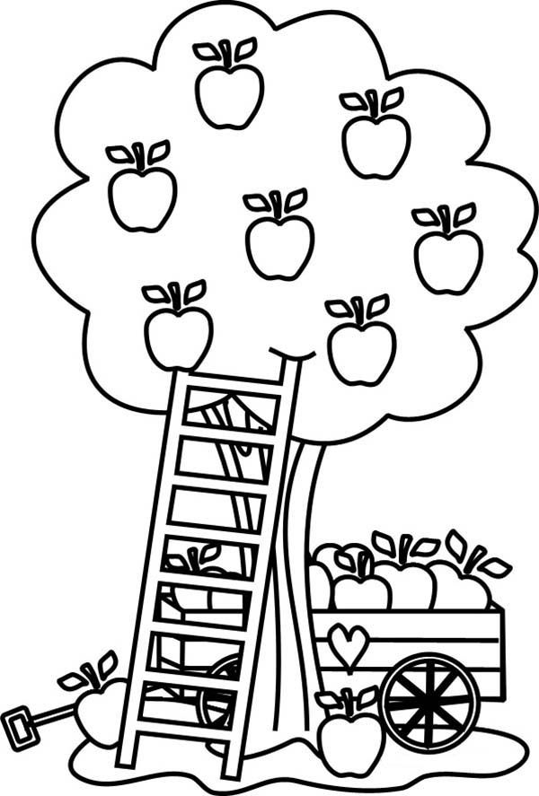 fall tree coloring pages - apple tree pictures to color