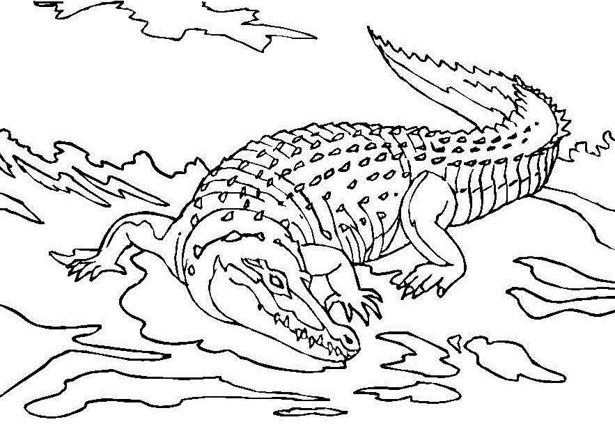 fire coloring pages - crocodile coloring page