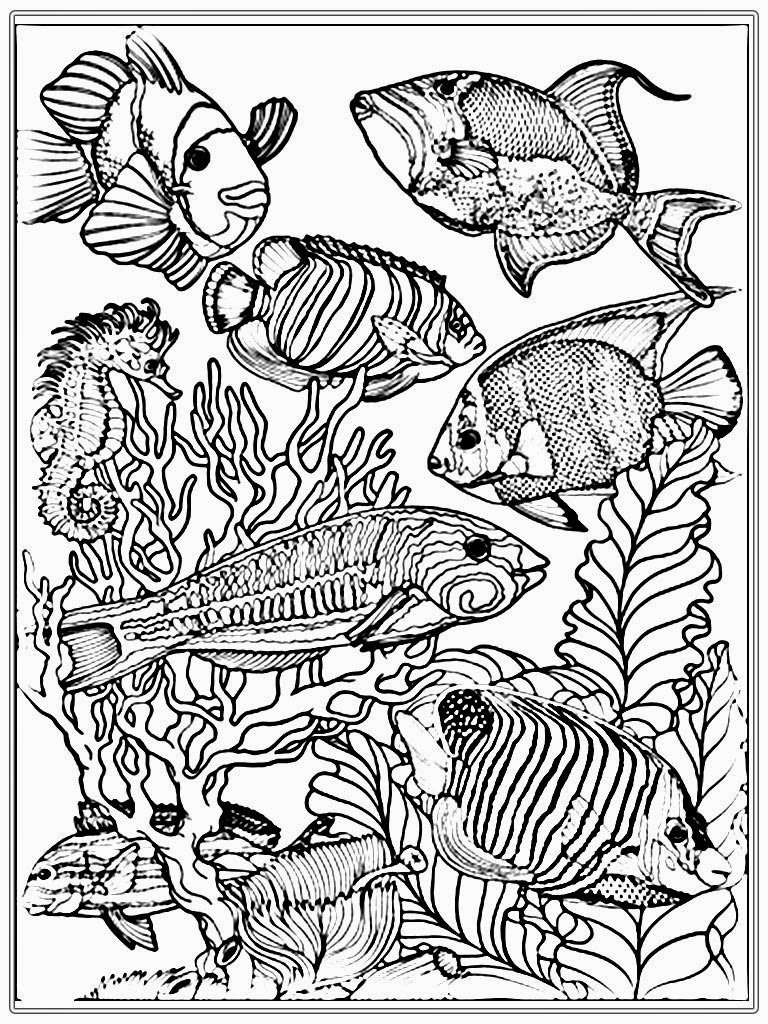 fish coloring pages for adults - adult free fish coloring pages