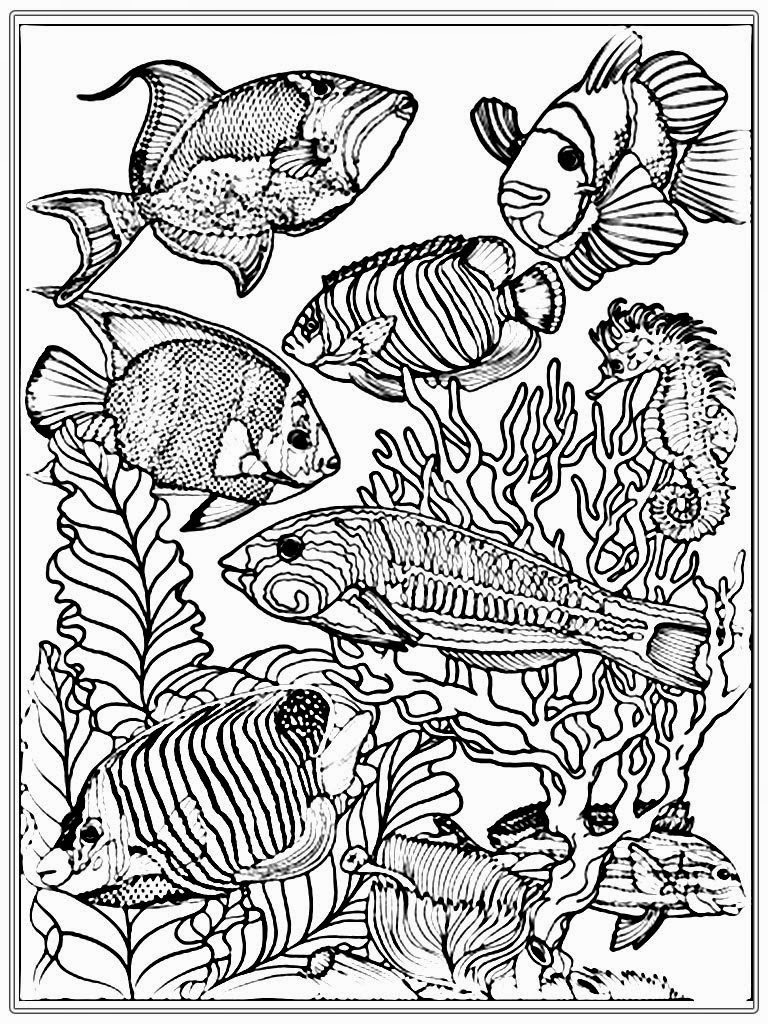 fish coloring pages for adults - fish coloring pages for adults